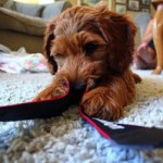 Tips for Puppy Care