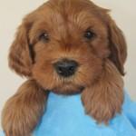 Finn's Pup